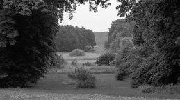 Bosque en Alemania