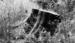 árbol